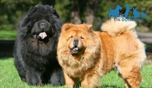 10 giống chó nguy hiểm nhất thế giới