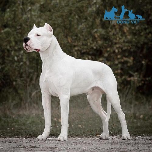 top 10 chó dữ nhất thế giới