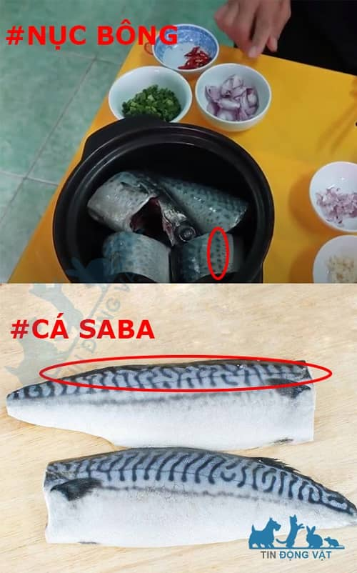 cá nục bông và cá saba